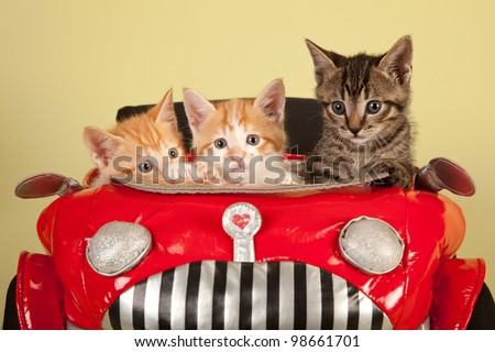 Moggie kittens inside red toy car on yellow green background