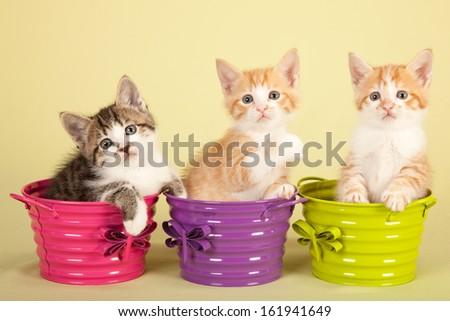 Moggie kittens sitting in colorful pails buckets on yellow green background - stock photo