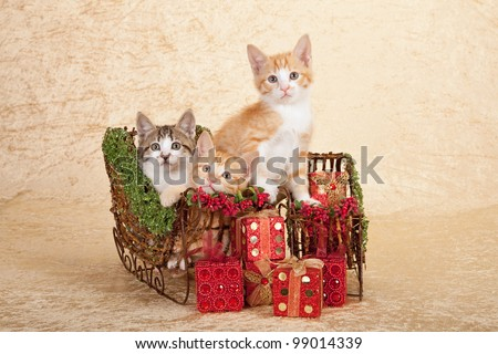 Moggie kittens sitting in sleighs sleds with red Christmas presents on beige background - stock photo