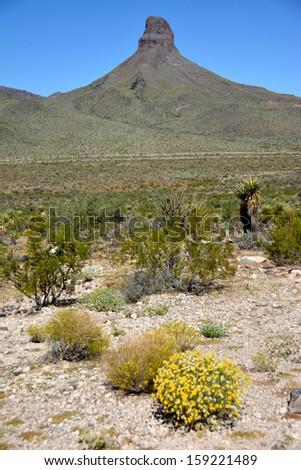 Mohave Desert - stock photo