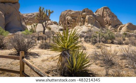 Mohave yucca, palo verde and Joshua tree with split rail fence in the Mohave Desert, Joshua Tree, California