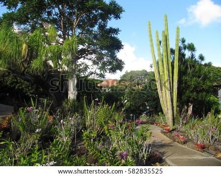 Moir Botanical Garden At Poipu, Kauai Island, Hawaii, USA