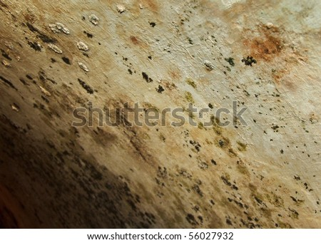 Mold caps on the ceiling of damp basement. Moist cellar. - stock photo