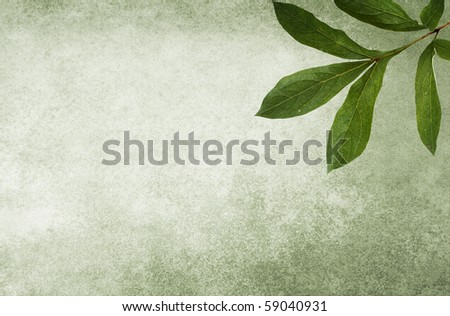 Mold-green background with peony leaf. Soft texture. - stock photo