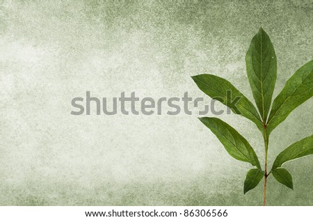 Mold-green grungy background with a peony leaf. Soft texture. - stock photo