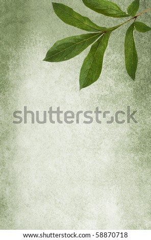 Mold-green grungy background with peony leaf. Soft texture. Copy-space. - stock photo