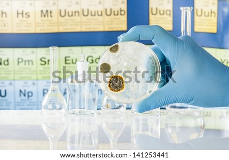 Mold growing in a Petri dish being held with glove - stock photo