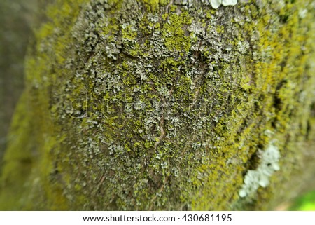 Mold growing on the bark of a tree with blurred edges