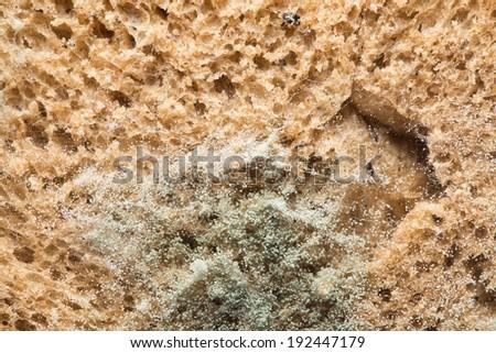 mold on bread. macro - stock photo