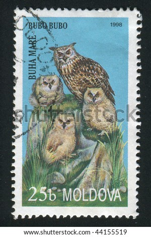 MOLDOVA - CIRCA 1998: owl. Bird on a branch, circa 1998.