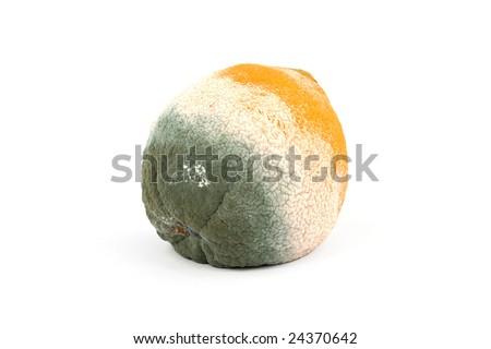 Moldy rotten orange fruit isolated on pure white - stock photo