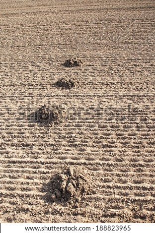 Mole mound in the plowed land - stock photo