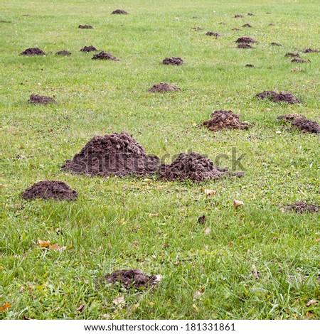 Mole mound in the sports stadium - stock photo
