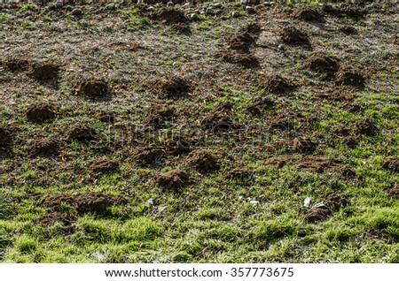 Mole mound in the sports stadium,horizontal photo - stock photo