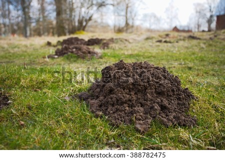 Molehills in a countryside landscape