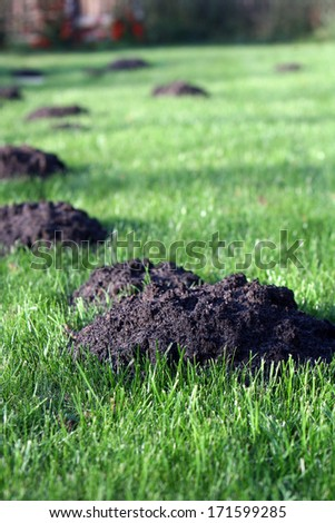 Molehills in an english garden  - stock photo
