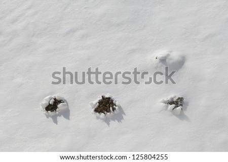 molehills in line in winter - stock photo
