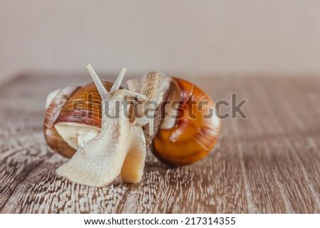 mollusks grass slime, the grape snail Bright shell creeps - stock photo