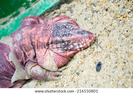 Molting reptile - stock photo