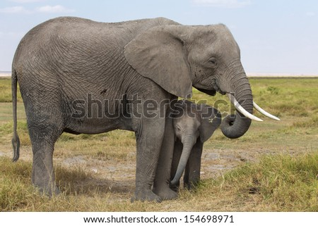 Mom and Baby elephant - Kenya - stock photo