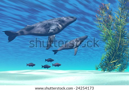 Mom and baby Humpback whales swim together in a crystal clear ocean. - stock photo