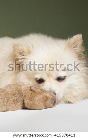 mom and puppy  - stock photo