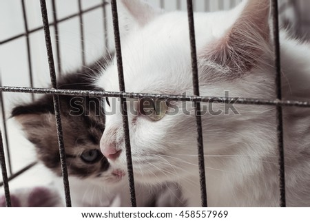 Mom cat in cage vintage tone