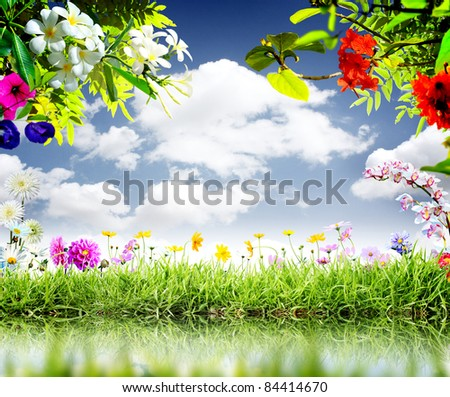 moment for this beautiful flower Blue sky - stock photo