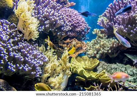 MONACO - JULY 8, 2014: Aquarium in Oceanographic Museum in Monaco - museum of marine sciences. Oceanographic Museum is home to the Mediterranean Science Commission.