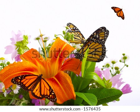 Monarch butterflies on bouquet of flowers. - stock photo
