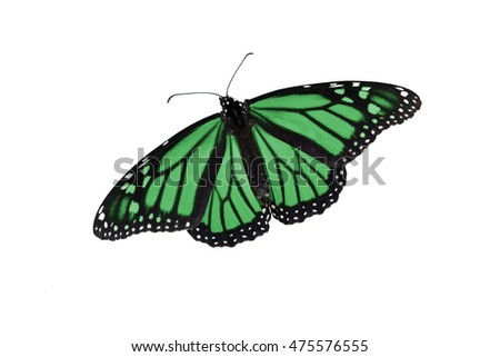Monarch butterfly edited in a colorful green, on an isolated, pure white background. Can be rotated, flipped, use for a variety of ideas and concepts. Copy space, horizontal or vertical, flat layout