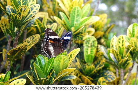 Monarch butterfly in a tropical garden - stock photo