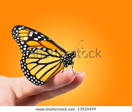 Monarch Butterfly on finger tips