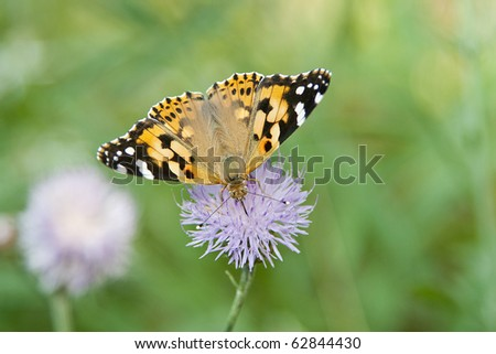 Monarch Butterfly over flower - stock photo