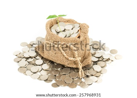 Money bag with coins and money tree isolated at a white background - stock photo