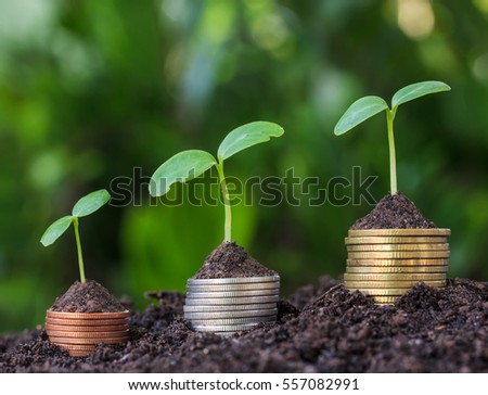 Money coin Steps.Business Finance and Money concept Hope of investor concept.tree growing on coin