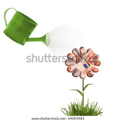 Money flower - stock photo