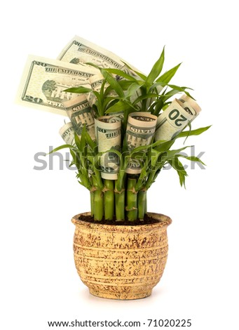 Money growing concept. Money banknotes growing  in flowerpot isolated on white background. - stock photo