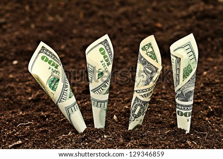 Money growing. Dollars bill growing in soil. - stock photo
