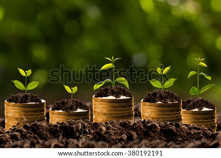 Money growing in soil , Business success concept.