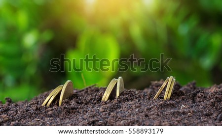 Money growth concept coins in soil.Yellow tone with sun