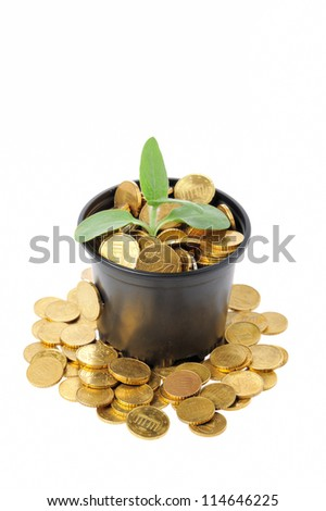 Money growth concept with coins and young plant - stock photo