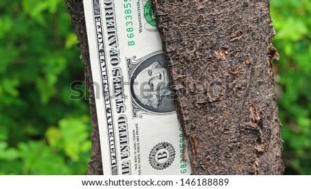 Money (One dollars) on a tree. - stock photo