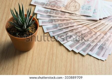 Money thai banknote (One thousand bath)and Haworthia Fasciata on wooden table. - stock photo