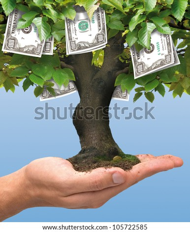 Money tree growing on human hand - hundred dollars concept  - stock photo
