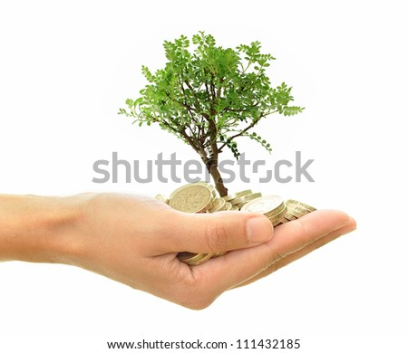 Money tree in hand - stock photo