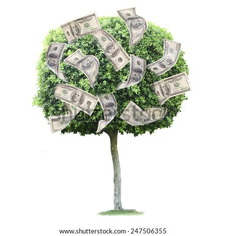 Money tree isolated on white - stock photo