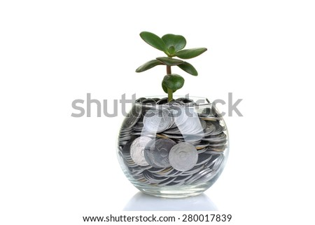 money tree sprout  with coins - stock photo