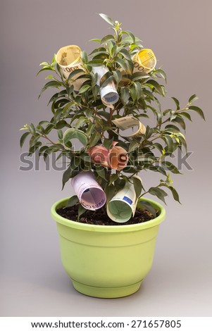 Money tree with euro banknotes Isolated on gray - stock photo