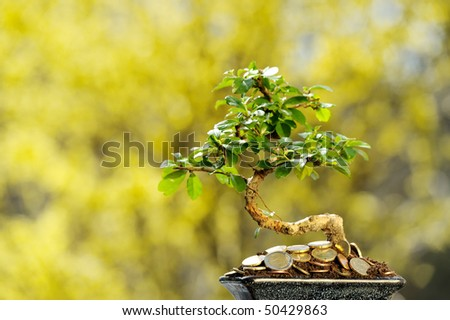 Money tree with european coins. - stock photo